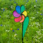Little Daisy Rainbow